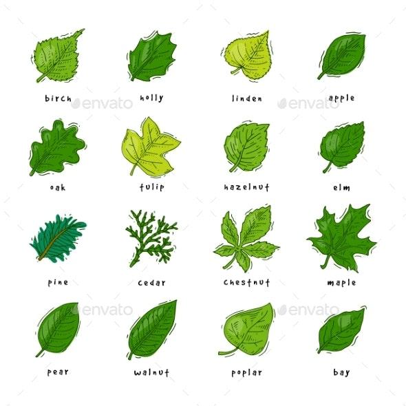 Leaf Vectors - Flowers & Plants Nature
