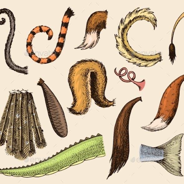 Animal Tail Vectors