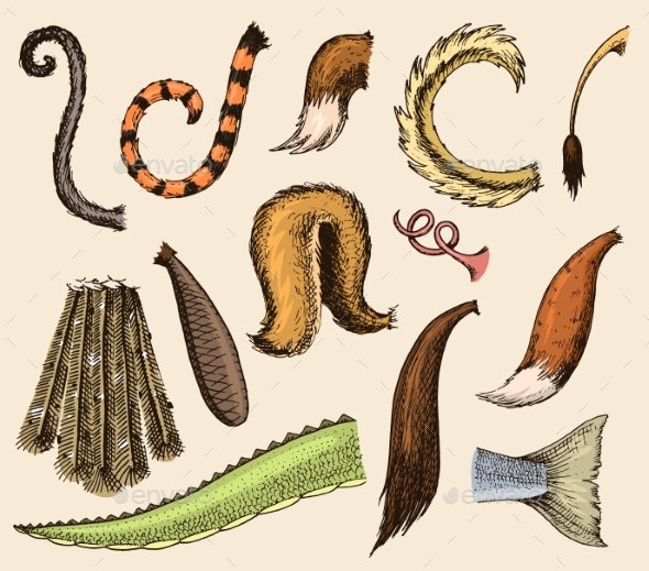 Animal Tail Vectors - Animals Characters