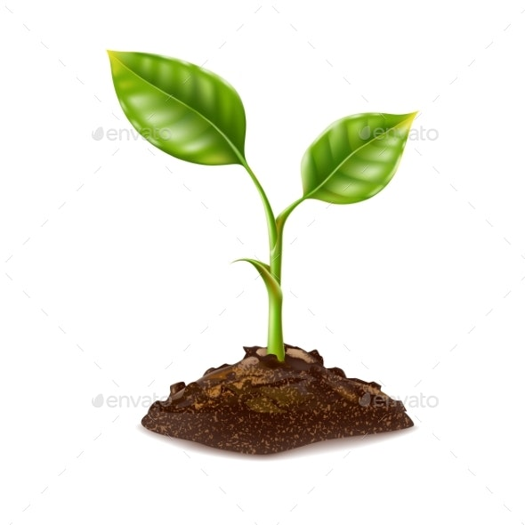 Vector Realistic Green Seedling Grows in Soil - Flowers & Plants Nature