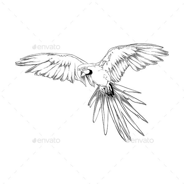 Hand Drawn Sketch of Brazilian Parrot Bird - Animals Characters