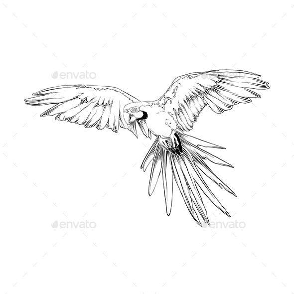 Hand Drawn Sketch of Brazilian Parrot Bird