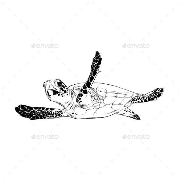 Hand Drawn Sketch of Turtle - Animals Characters