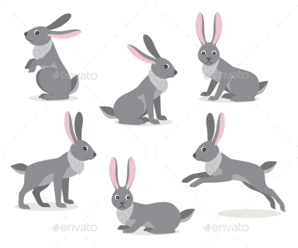 Set of Cute Gray Hare in Different Pose on White - Animals Characters