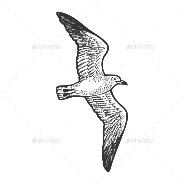 Seagull Bird Sketch Engraving Vector Illustration - Animals Characters