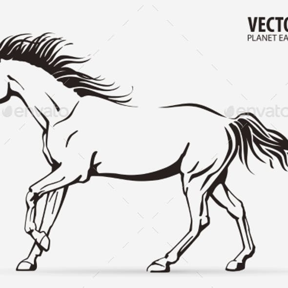 Silhouette of a Running Horse Galloping Animal