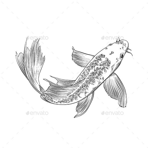 Hand Drawn Sketch of Japanese Carp Fish - Animals Characters