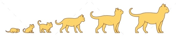 Stages of Cat Growth Set - Animals Characters