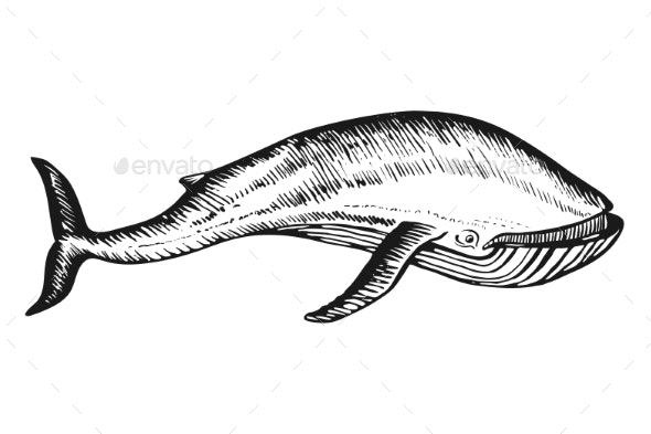 Whale Doodle Hand Drawn Sketch Vector - Animals Characters