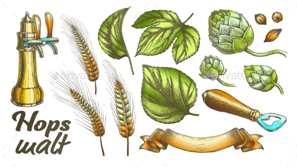 Color Hop Leaves Barley Wheat Rye Ear Opener Set - Miscellaneous Vectors
