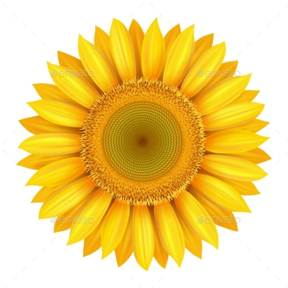 Realistic Bright Yellow Sunflower - Flowers & Plants Nature