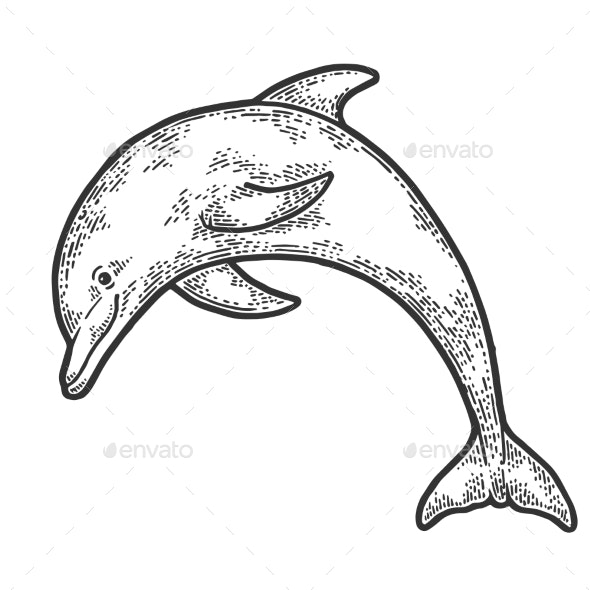 Dolphin Jumping Sketch Engraving Vector - Animals Characters