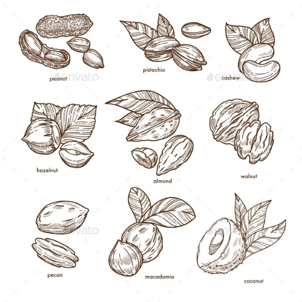 Nuts Isolated Sketches Healthy Food and Organic - Food Objects