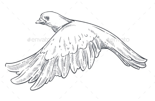 Dove or Pigeon Isolated Animal Sketch Flying Bird - Animals Characters