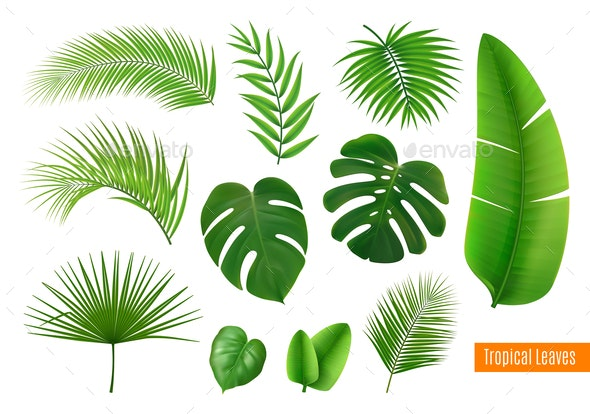 Tropical Leaves Realistic Set - Flowers & Plants Nature