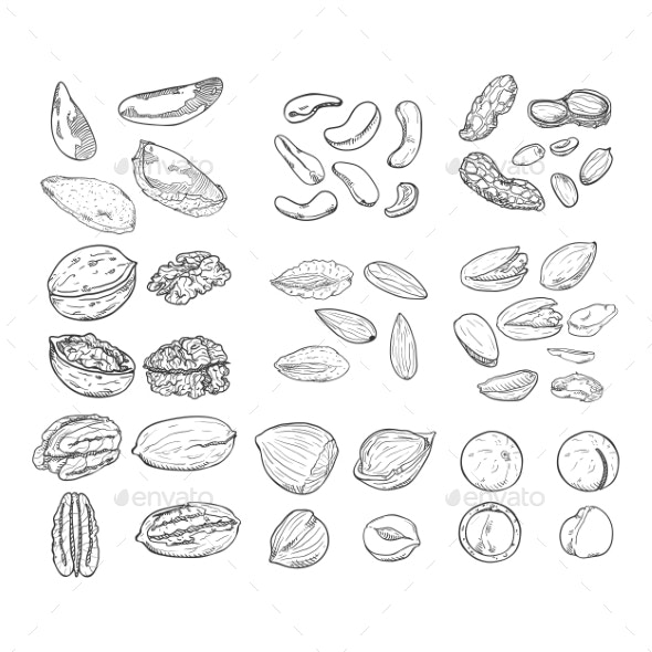 Vector Sketch Set of Nuts - Food Objects