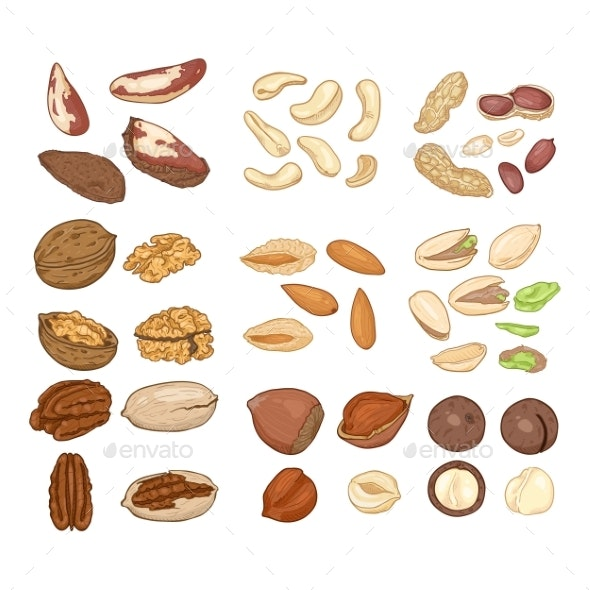 Vector Cartoon Set of Nuts All Types of Edible - Food Objects