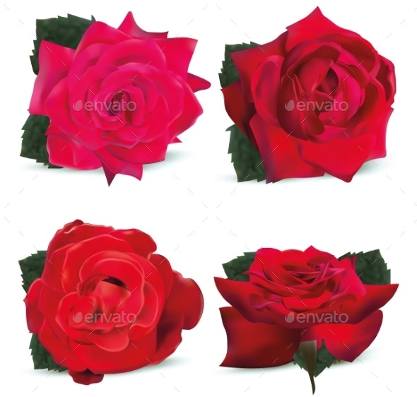 Collection Red Roses on White Background - Flowers & Plants Nature