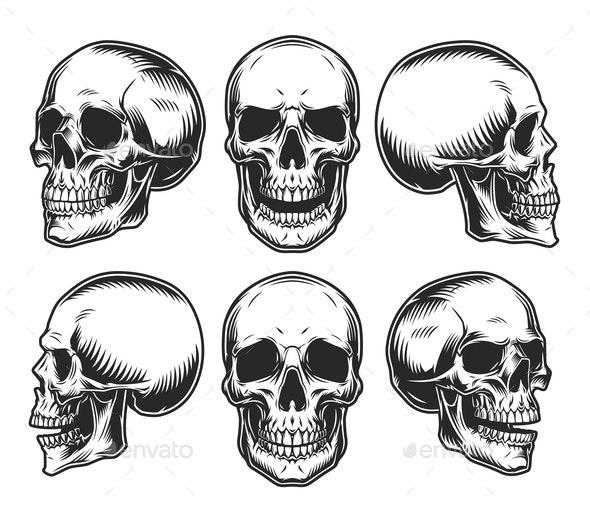 Human Skulls Collection - Miscellaneous Vectors