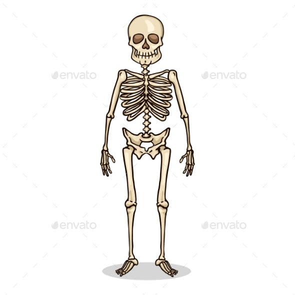 Vector Cartoon Color Character Human Skeleton