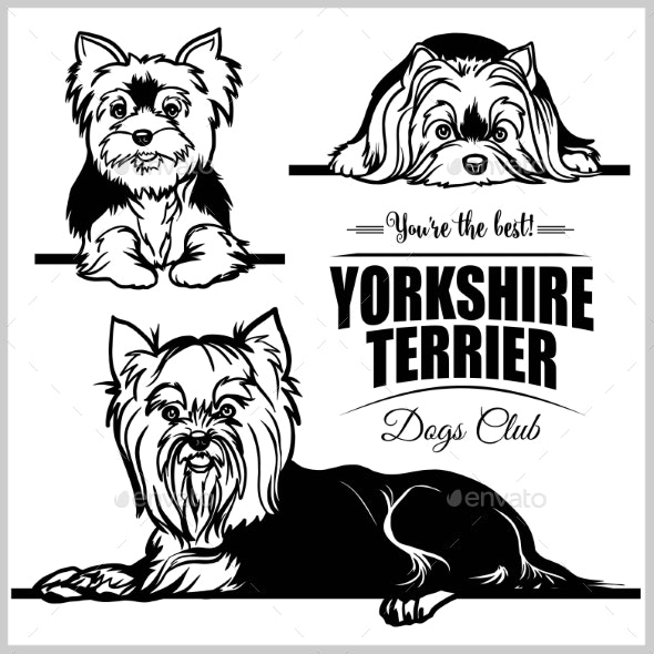 Yorkshire Terrier - Vector Set Isolated - Animals Characters