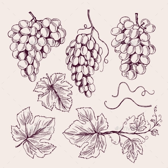 Grape Hand Drawn Vine Leaves and Branch Tendrils - Food Objects