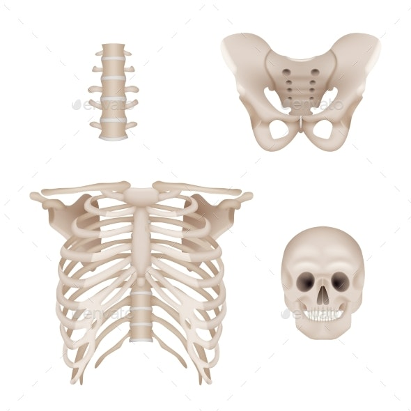 Human Skeleton - Miscellaneous Vectors