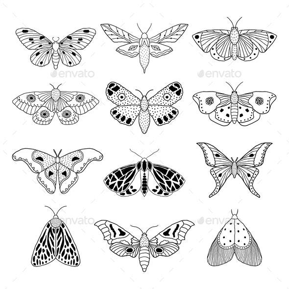 Moths - Miscellaneous Vectors
