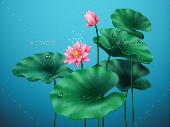 Flower of Lotus with Leaves on Blue Background - Flowers & Plants Nature