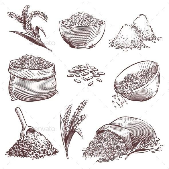 Sketch of Rice - Food Objects