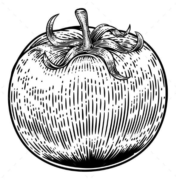 Tomato Vintage Woodcut Illustration - Food Objects