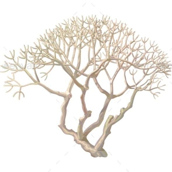 Vector Hand Drawn Plant Clip Art