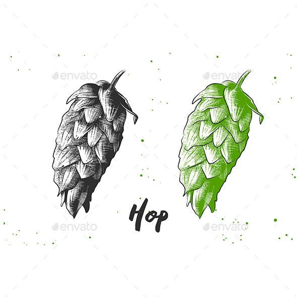 Hand Drawn Sketch Of Hop - Organic Objects Objects