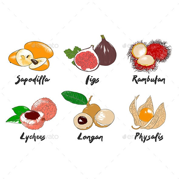 Vector Engraved Style Organic Exotic Fruits Collection - Food Objects
