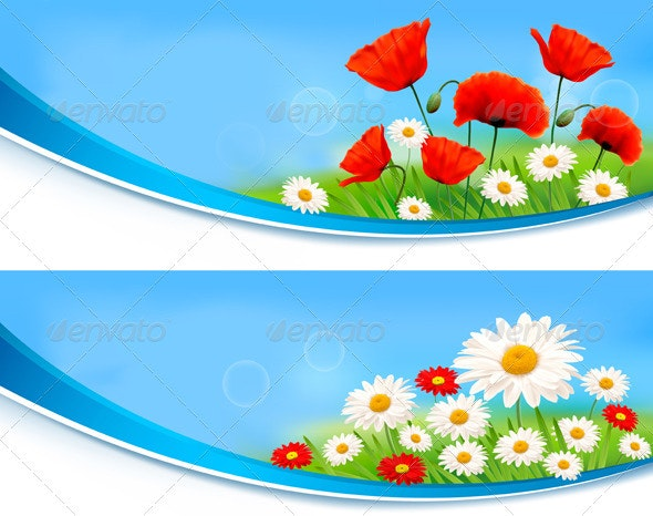 Beautiful banners with daisies and poppies. - Flowers & Plants Nature