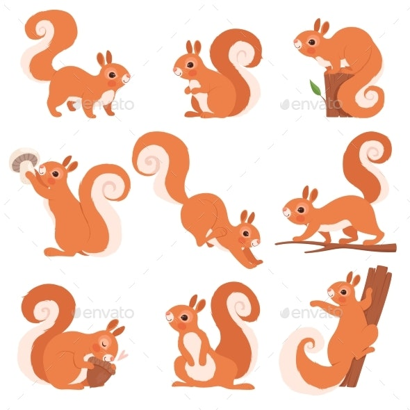 Cartoon Squirrel - Animals Characters