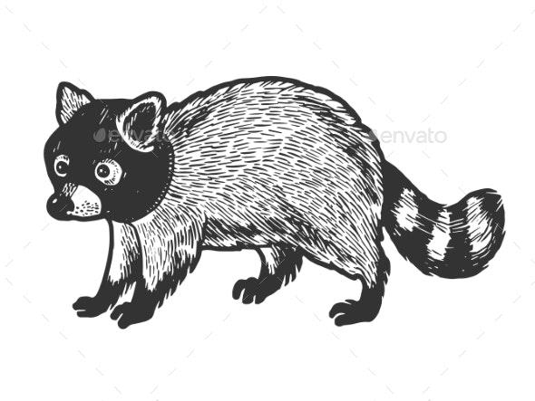 Raccoon in Hat Balaclava Sketch Engraving Vector - Animals Characters