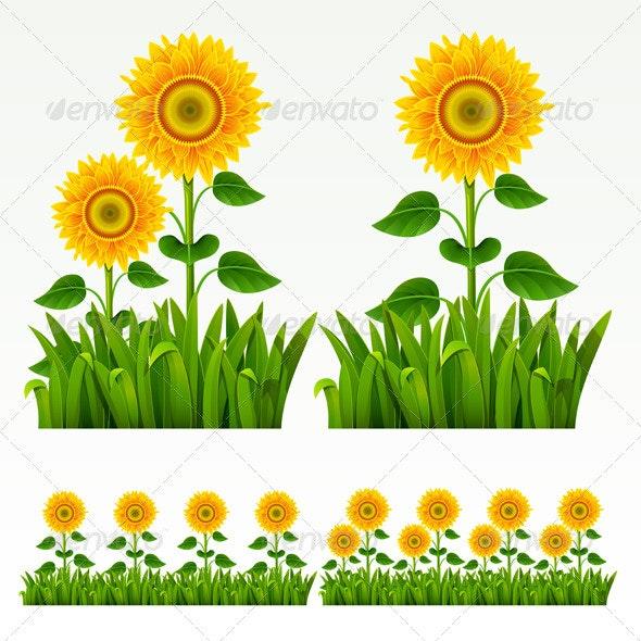 Grass border - Flowers & Plants Nature