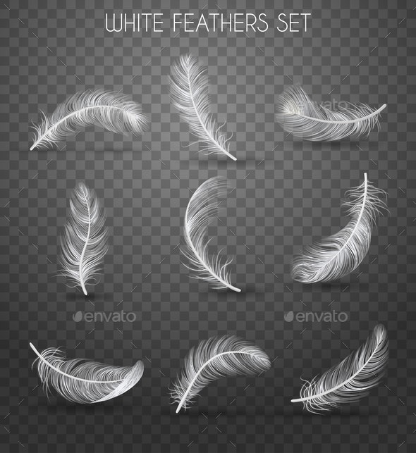 Realistic Feather Transparent Set - Organic Objects Objects