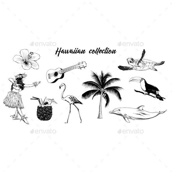 Hand Drawn Sketch of Hawaiian Collection