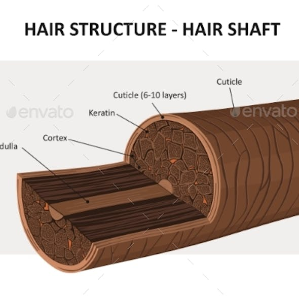 Hair Structure - Vector Illustration