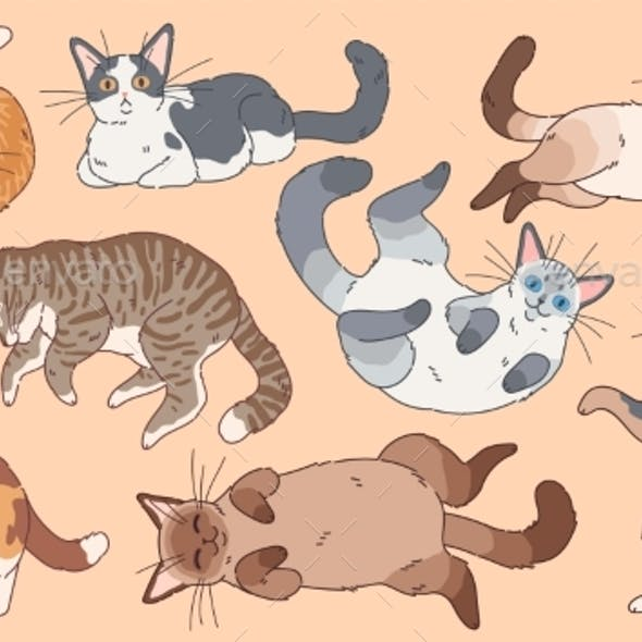 Different Breeds Kittens , Pets