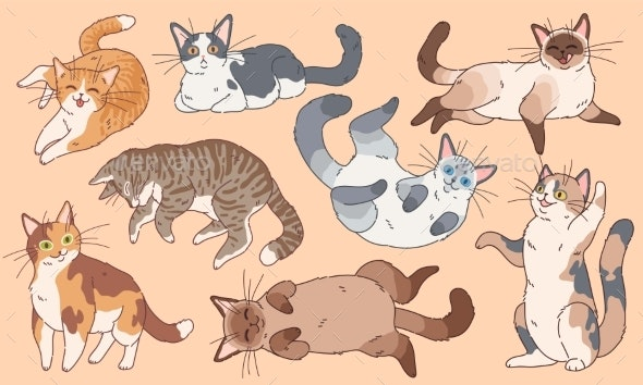 Different Breeds Kittens , Pets - People Characters