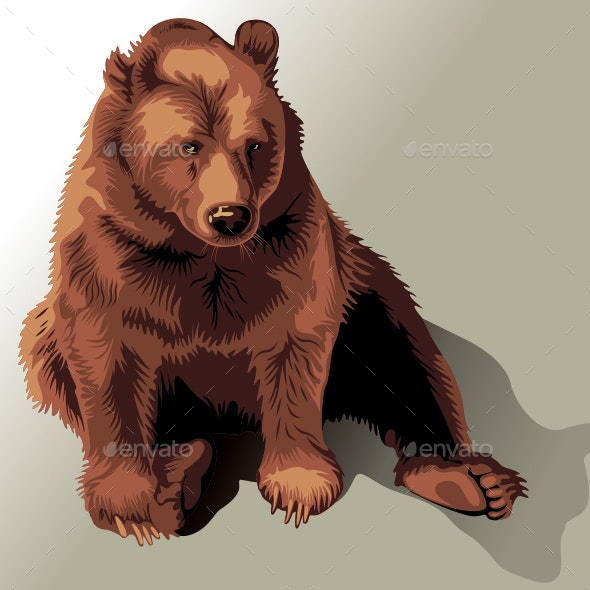 Bear - Animals Characters