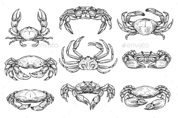 Crustacean Marine Crab Animal Sketches - Animals Characters