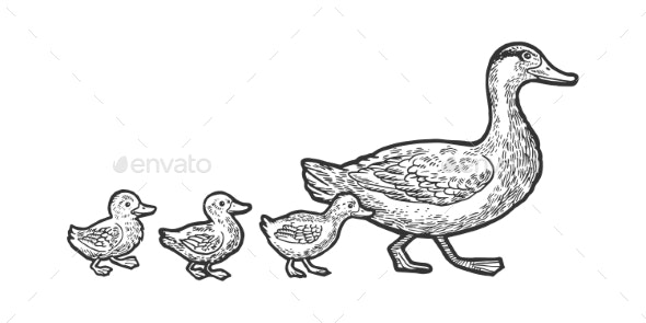 Duck with Ducklings Sketch Vector Illustration - Animals Characters