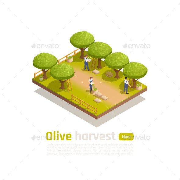 Olive Oil Production - People Characters