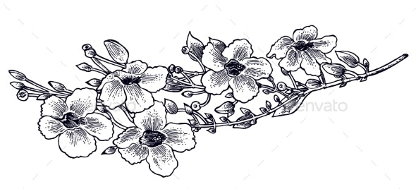 Hand Drawn Flower of Morning Glory Daisy - Flowers & Plants Nature