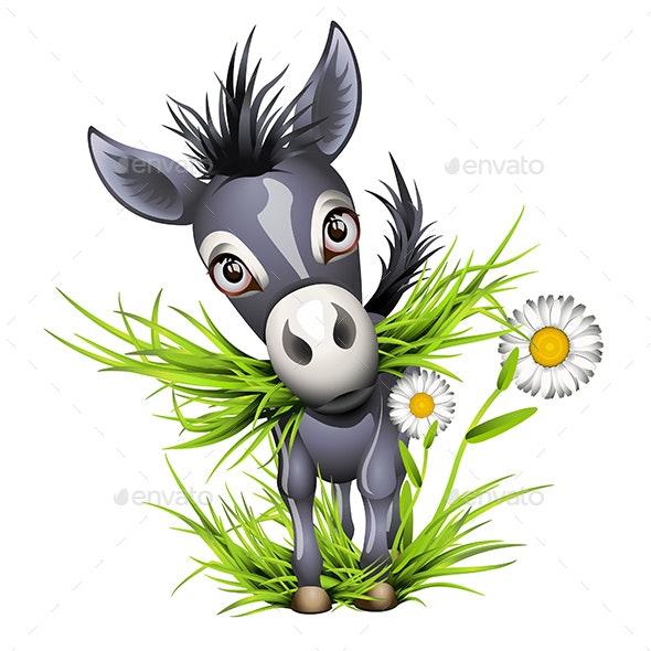 Grey Donkey - Animals Characters