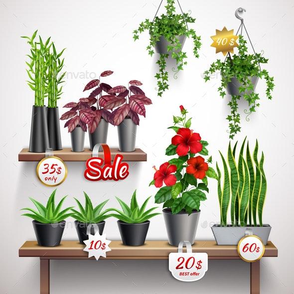 House Plants Shop - Flowers & Plants Nature